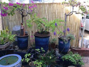 front plants